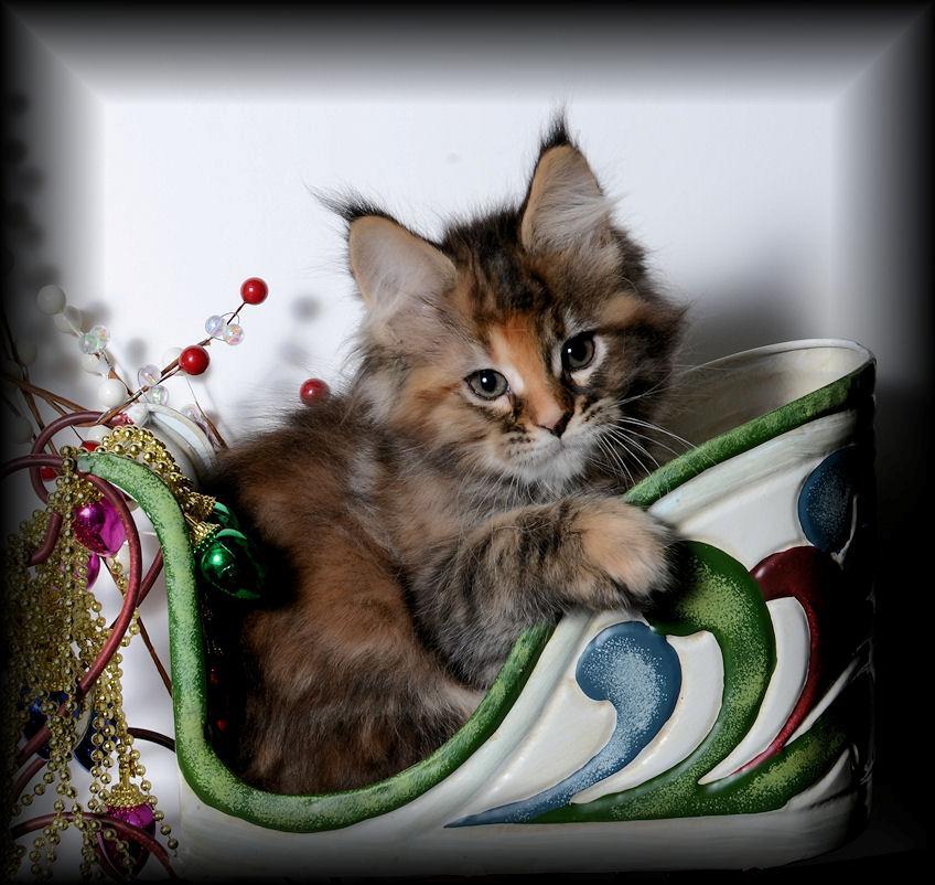 joins cute inside cat department of kittens lincoln ranks kitten police the ne edition
